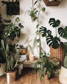 Amazing Indoor Jungle Ideas To Home Decor The most beautiful plants decoratio. - Amazing Indoor Jungle Ideas To Home Decor The most beautiful plants decoration ideas Green is T - Bedroom Plants, Bedroom Decor, Bedroom Furniture, Indoor Garden, Indoor Plants, Indoor Outdoor, Herb Garden, Faux Plants, Garden Beds