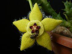 Orbea semota, by f_msantos..., via Flickr