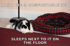 Bunny Memes - Bunny Approved - House Rabbit Toys, Snacks, and Accessories Bunny Meme, Funny Bunnies, Baby Bunnies, Cute Bunny, Rabbit Life, House Rabbit, Rabbit Toys, Pet Rabbit, Bunny Litter Box