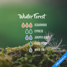 Winter Forest - Essential Oil Diffuser Blend