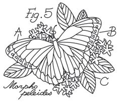 Miniature Menagerie Butterfly Diagram   Urban Threads: Unique and Awesome Embroidery Designs