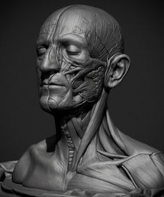 Incredibly Lifelike Anatomical Study Using ZBrush – Street Anatomy Head Anatomy, Body Anatomy, Anatomy Study, Anatomy Drawing, Anatomy Art, Anatomy Models, Anatomy For Artists, Body Reference, Anatomy Reference