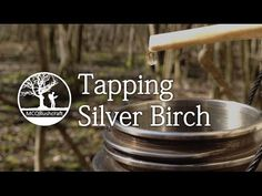 Bushcraft Foraging: Tapping Silver Birch - YouTube