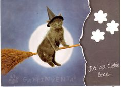 https://flic.kr/p/biYvuR | Postcrossing PL-15997 | The girl from Poland who sent this to me says that this means - I'm flying to you right now - in Polish. Very cool card - I love both cats and Halloween!