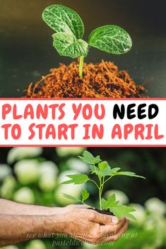 What should you be growing in the month of April? What to sow in April Planting Vegetables, Planting Seeds, Growing Vegetables, Planting Flowers, Vegetable Gardening, Veggies, Varieties Of Tomatoes, Grow Tomatoes, April April