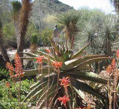 Stunning Desert Beauty at Desert Botanical Garden: Desert Botanical Garden in Phoenix, AZ