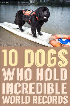10 Dogs who hold INCREDIBLE world records!