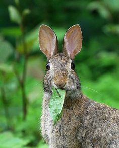 Nature Photo of the Week: Silly Rabbit Wild Life, Mundo Animal, My Animal, Animals Beautiful, Cute Animals, Small Animals, Silly Rabbit, Jack Rabbit, Peter Rabbit