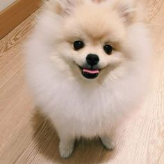 Cotton ball with feet