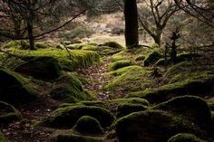 Mossy Rocks in Woods - Cornwall Guide Photos