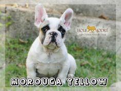 Morouga Yellow