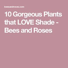 10 Gorgeous Plants that LOVE Shade - Bees and Roses