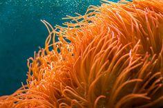 Blue Aquarium. Blue Aquarium with orange corals and fish by Mariana Lisina