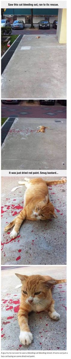 A guy try to run over to save a bleeding cat on the street, it turns out just a lazy cat laying on some dried red paint.