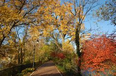 Fall along the Naperville Riverwalk