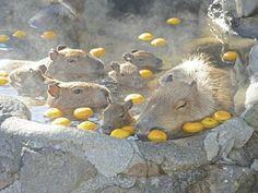 YUZU-YU. (n) a hot citron bath. - [ Learn Japanese Words with Pinterest by webjapanese.com ]