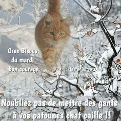 Bon Mardi, Bon Courage, Cats, Animals, Good Morning Images, Hapy Day, Handsome Quotes, Angel, Seasons
