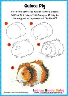 Learn and teach your kid to draw and paint Guinea Pig with simple drawing tips