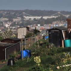 Allotments, Bristol, with the suspension brifge in the background. Like Rome, Bristol is built on many hills.