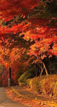 Fall at it's best....  #ADKAutumn
