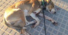 Encuentren a los enfermos que lastimaron a este perro FIRMA Y COMPARTE ESTA PETICIÓN AHORA!