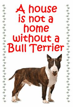 This is so true. I have lived with Bull Terriers all my life. It would not seem like home without one.
