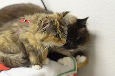 "At the vet's ""don't worry. I've got you covered Bean"" DSC_0191 by *lalalaurie, via Flickr"