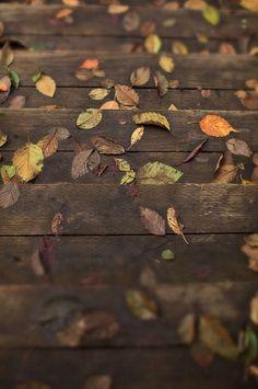 Allons faire une belle balade en forêt, dans les sous-bois...   C'est l'automne   les couleurs sont magnifiques, l'air est frais et revi...