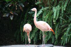 Sunken Garden, St. Petersburg, Florida