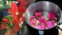Esta flor podría salvar tu vida de diferentes maneras, pero la estas usando como adorno - Alternativa ParaLa Salud
