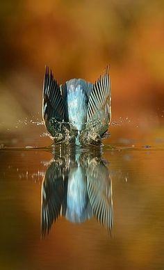 Alan McFayden è un grande appassionato di fotografia. Ci ha messo sei anni, 4600 ore di lavoro e circa 720mila scatti, ma alla fine ce l'ha fatta.    Ha scattato la foto perfetta del tuffo del m