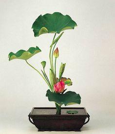 Lotus Shoka