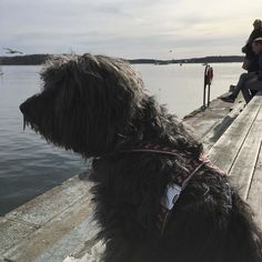 Pera is trying the new #pattifurry harness on a sunny day. #oslo #akerbrygge #astrupfearnley
