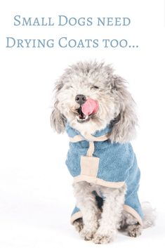 17 Best Dog Drying Coats images  330b63617