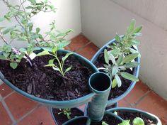 Horta orgânica com Jardim Vertical Espiral!