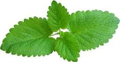 Pure Peppermint Essential Oil for Do-It-Yourself by redheadnblue