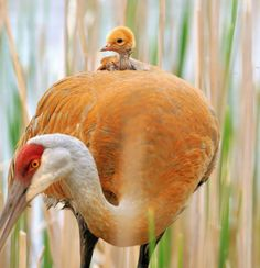 Cuicui: Les oiseaux aussi savent câliner leurs bébés - News Loisirs: Animaux - lematin.ch
