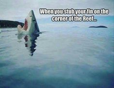 Poor shark. When you stub your fin on the corner of the reef