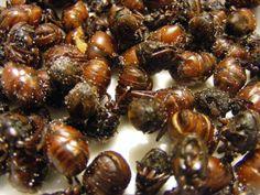 Ants, Snacks, Simple, Big Butts, South America, Wordpress, Public, Foods, Popular
