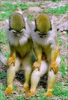 Monkey see; monkey do Rare Animals, Cute Baby Animals, Animals And Pets, Funny Animals, Monkeys Animals, Cutest Animals, Primates, Mammals, Beautiful Creatures