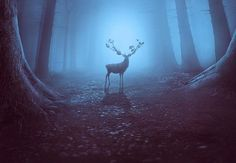 How to Create a Mysterious Forest Scene With Adobe Photoshop  -  https://themekeeper.com/graphic-design/how-to-create-a-mysterious-forest-scene-with-adobe-photoshop