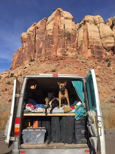 My Dog is My Co-Pilot: Tips for Van Life with Furry Friends