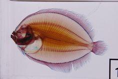 Fish   Flickr - Photo Sharing!