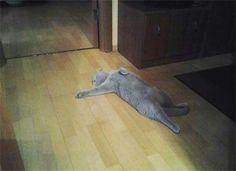 Over Dramatic Cat