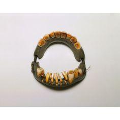 George Washington's false teeth... not made of wood, but rather animal teeth, other human teeth, and ivory.
