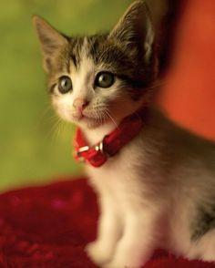 Tem como não amar gatinhos? Nós somos apaixonadas por animais e no taofeminino.com.br você encontra matérias e galerias fofíssimas de cachorrinhos gatinhos e outros bichos. Você é #doglover ou #catlover ?