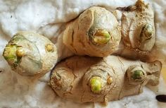Evinizde Zencefil Yetiştirmek ister misiniz? - Faydalı Bilgin Baked Potato, Diy And Crafts, Garlic, Potatoes, Baking, Vegetables, Ethnic Recipes, Food, Wordpress