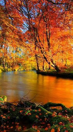 A PERFECT FALL PICTURE... That's why I LOVE the Season AUTUMN.../ss