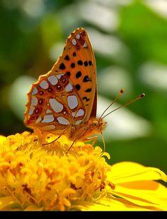 ♥ butterfly