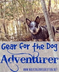 Gear for the Dog Adv